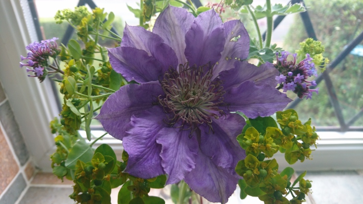Euphorbia oblongata as a cut flower.